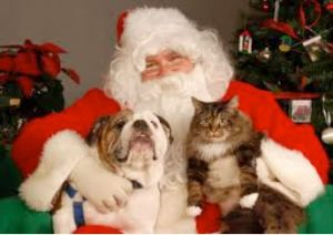 Pets Love Christmas Too - Chico Homeless Animal Outreach